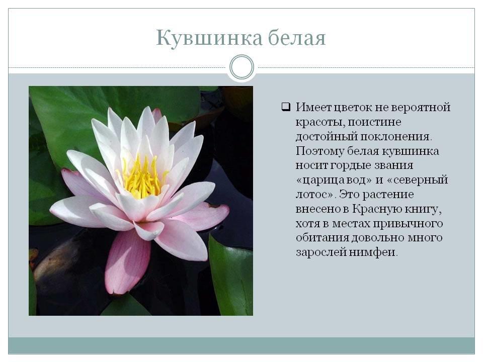 редкие растения картинки и описание растения