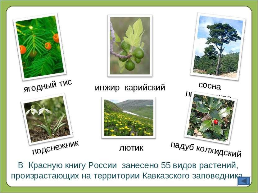 сумки картинки растений занесенных в красную книгу россии с названиями механизмах