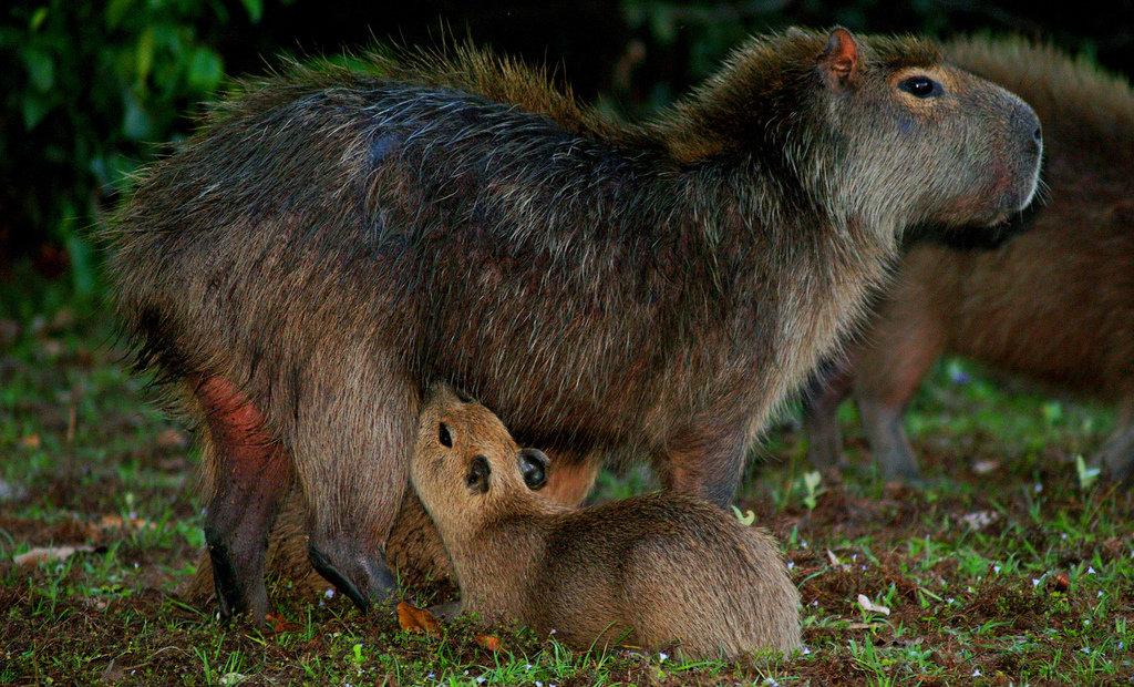 картинка кормить детеныша животного это неудивительно, ведь