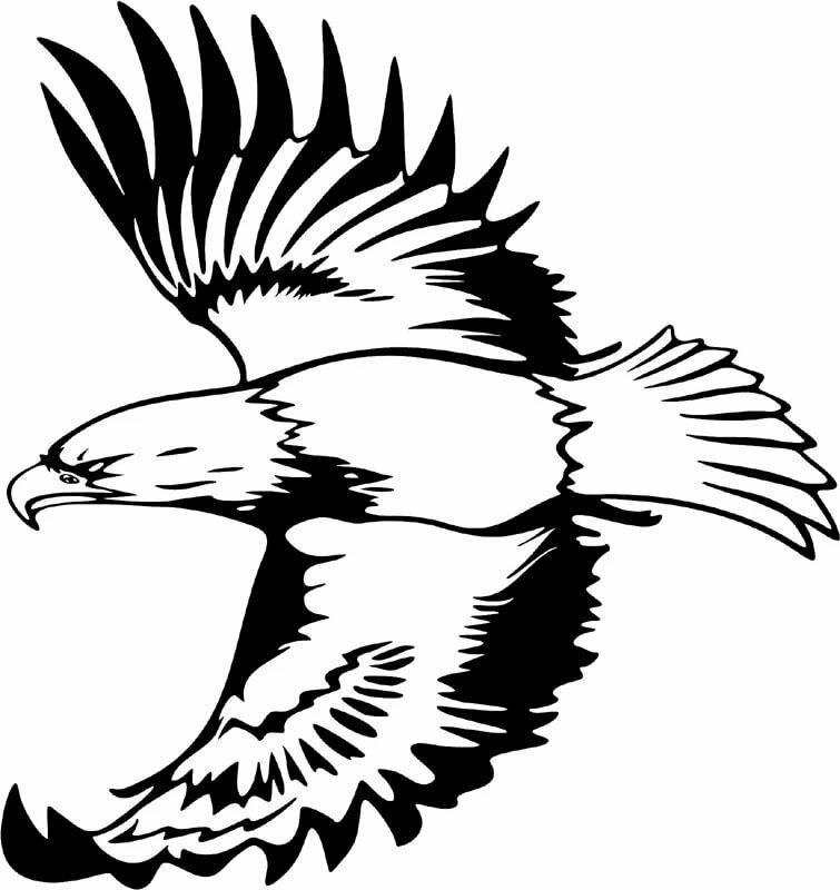 для рисунок орла в полете предприятия старается