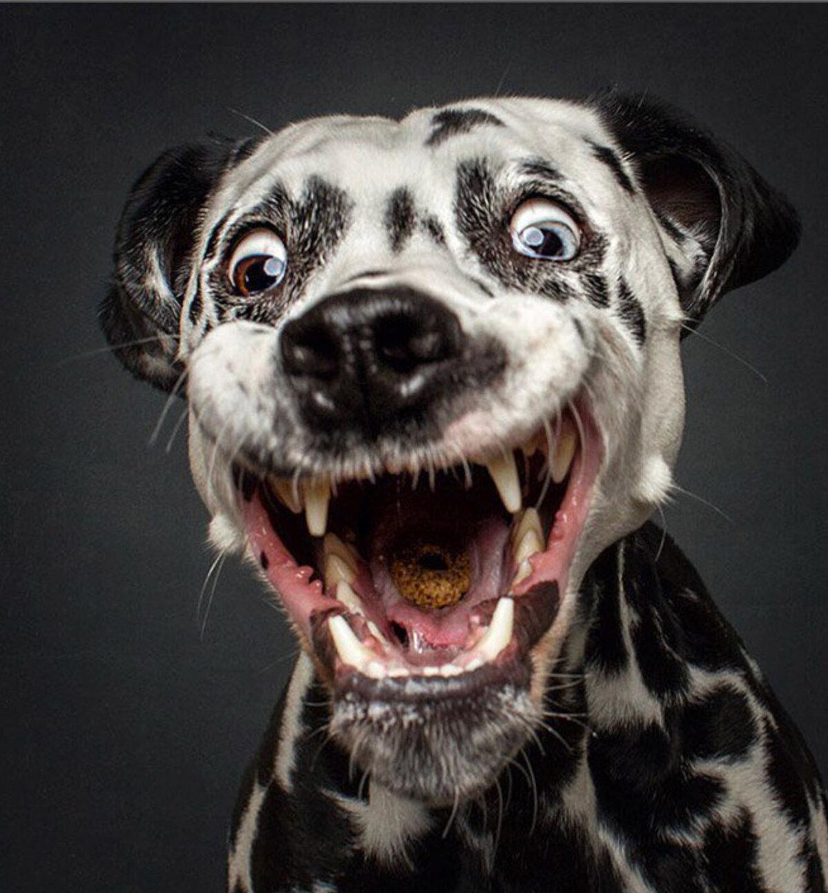 Прикольный картинки собачек