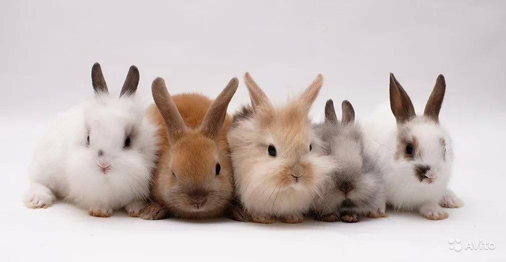 пять кроликов картинка фото, фото надписью