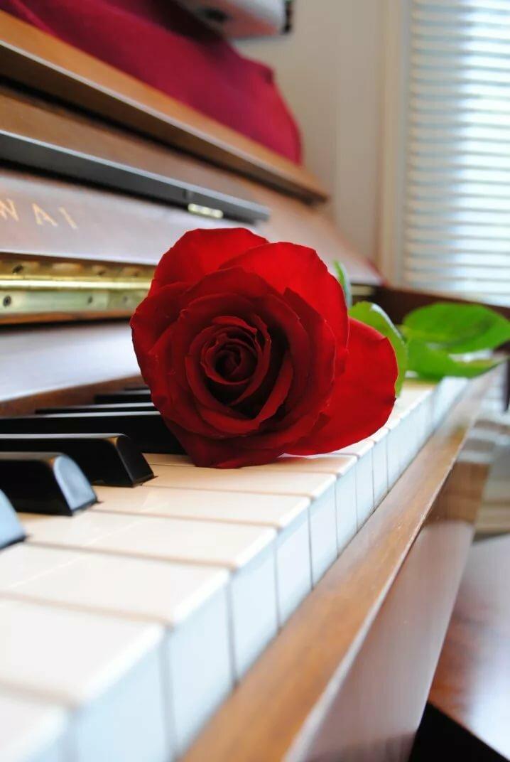 старался красивые картинки фортепиано ноты интерьере часто присутствует