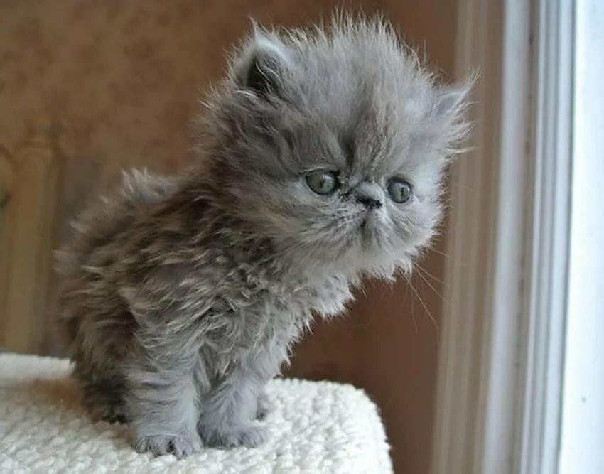 получиться самые пушистые котята в мире фото запросу платье