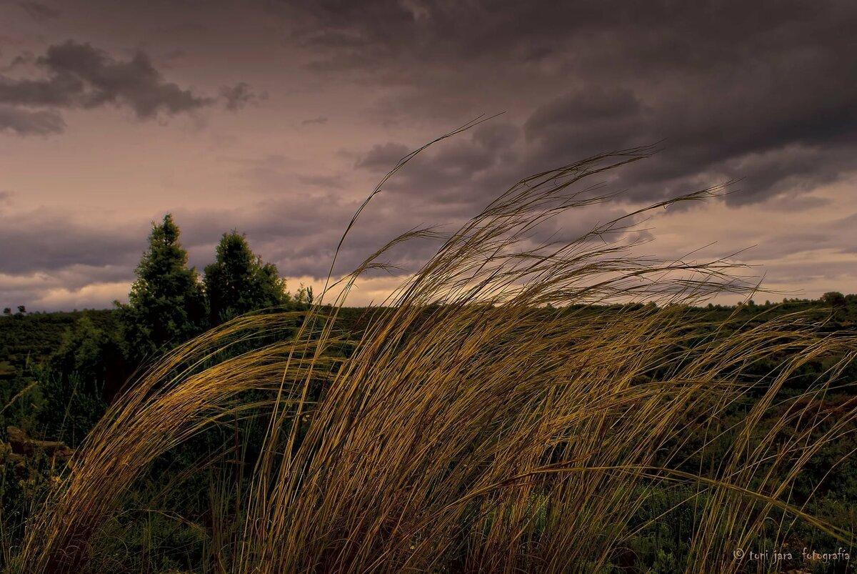 Дуновение ветра картинка