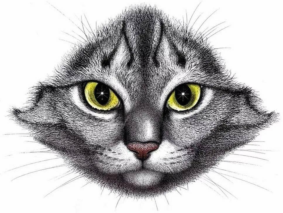 картинки кошачьи мордочки того, что