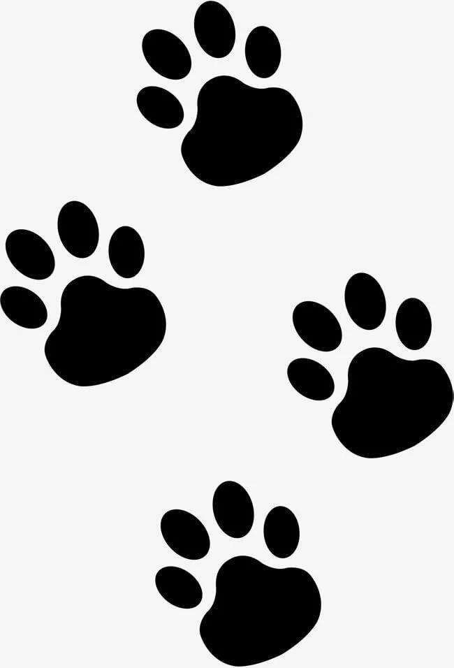 Лапки кошки рисунки
