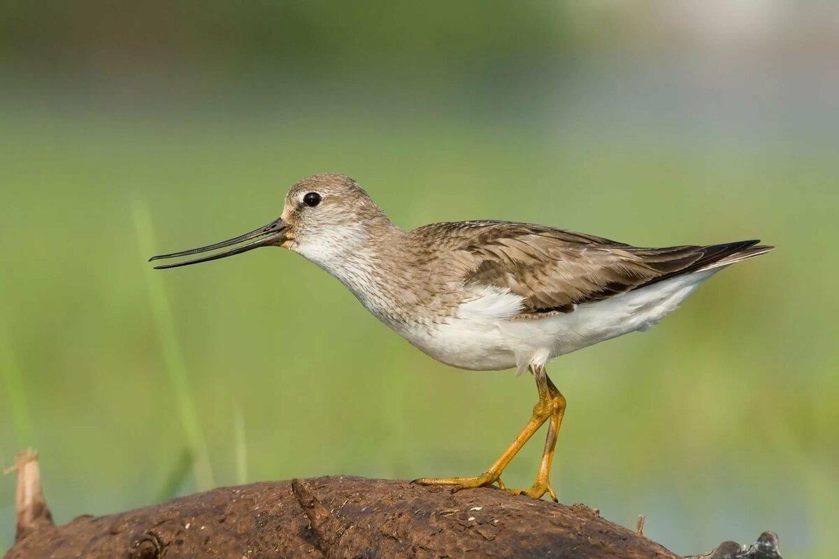 Птицы в нижегородской области