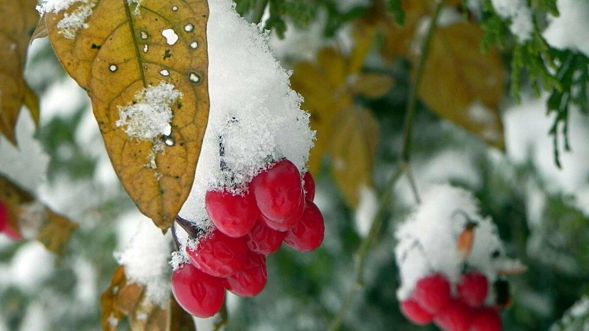 картинка на телефон первый снег что тупо