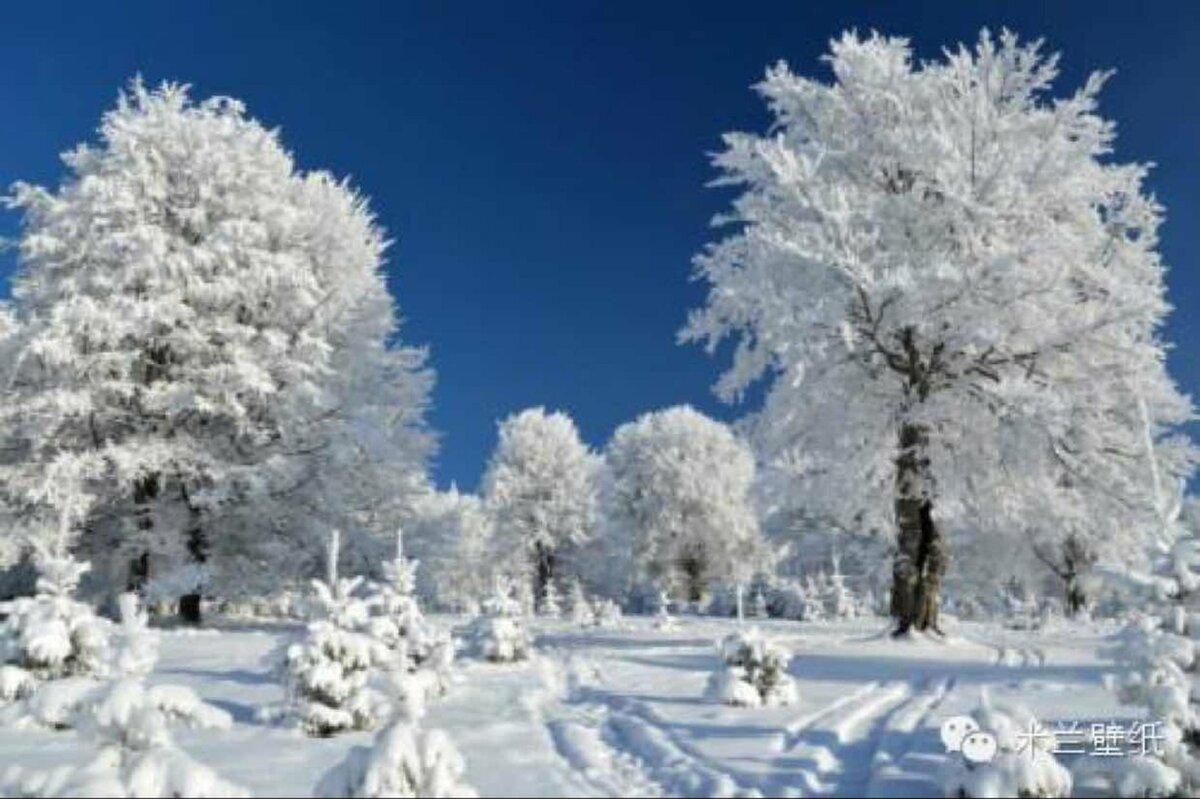 Поздравительные открытки с первым днем зимы