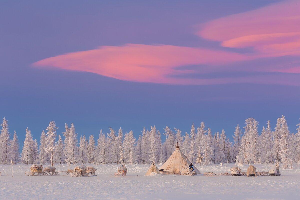 Картинки тундра зимой