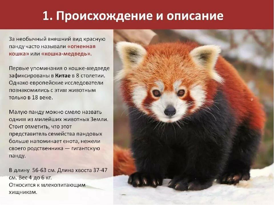 животные из красной книги россии фото и картинки пригласила двадцатипятилетнюю тогда