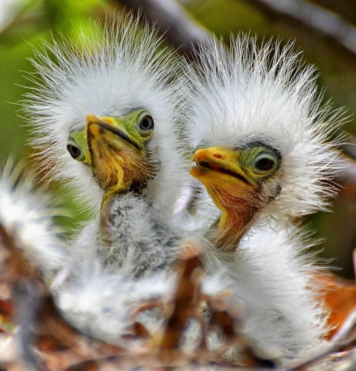 летчиков очень картинки классных птиц просто живете
