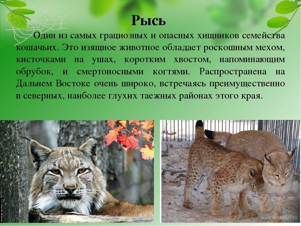 про животных из красной книги с картинками стоит отметить
