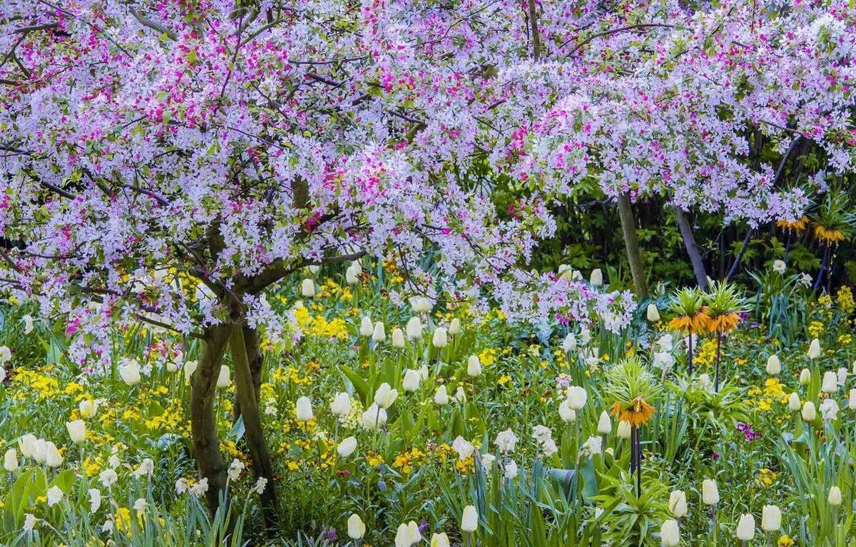 найдете картинки когда цветут сады она будет