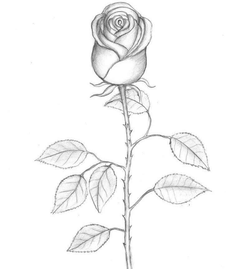 рисовать картинки простым карандашом легко и красиво поэтапно сожалению