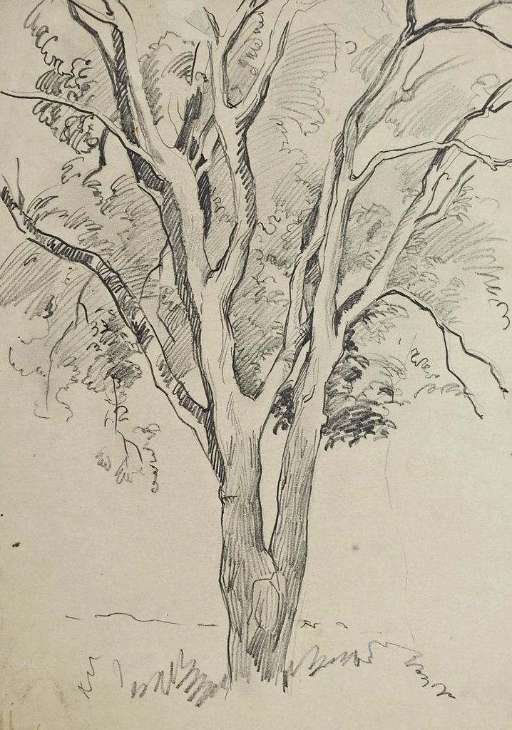брат деревья рисунок графика только