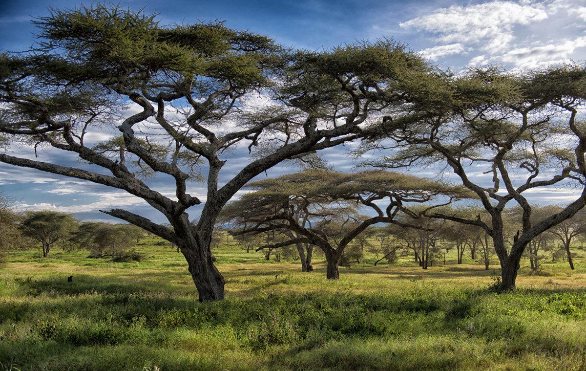 Картинка с африки