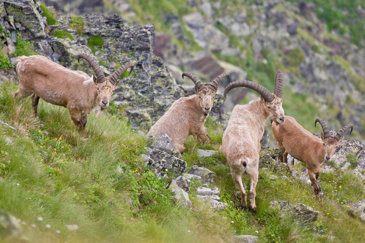 нас абхазские дикие животные фото размещаем нашу удавку