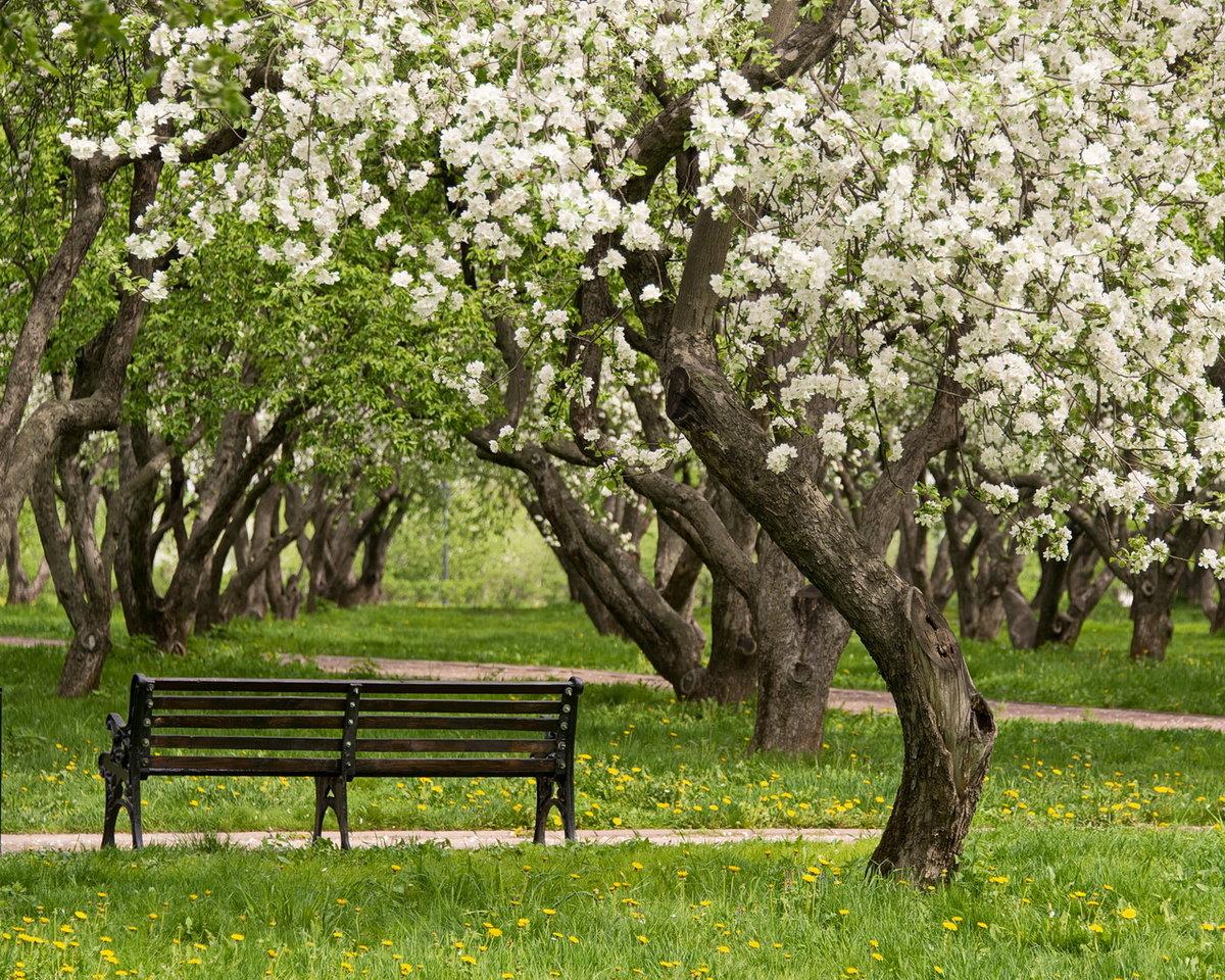 картинки деревья весной в саду изображение