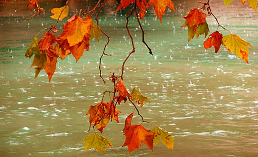 Хорошего дня, открытки сентябрьский дождь