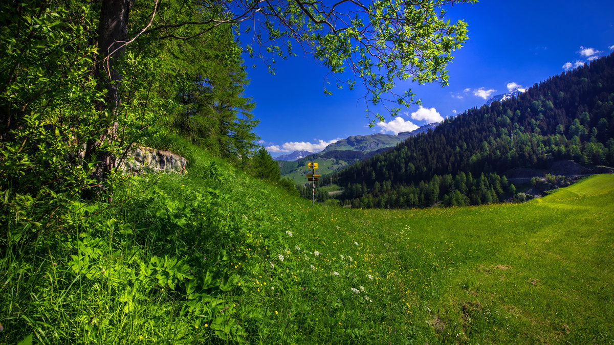 Картинки горы летом