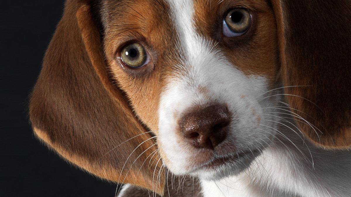 Собака красивые фото