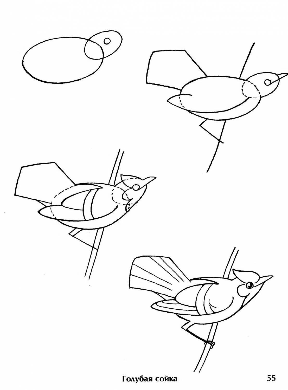 Птица рисунок карандашом для детей