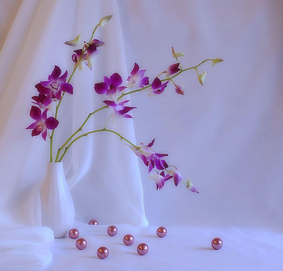 Открытки цветы орхидеи с днем рождения, открытки