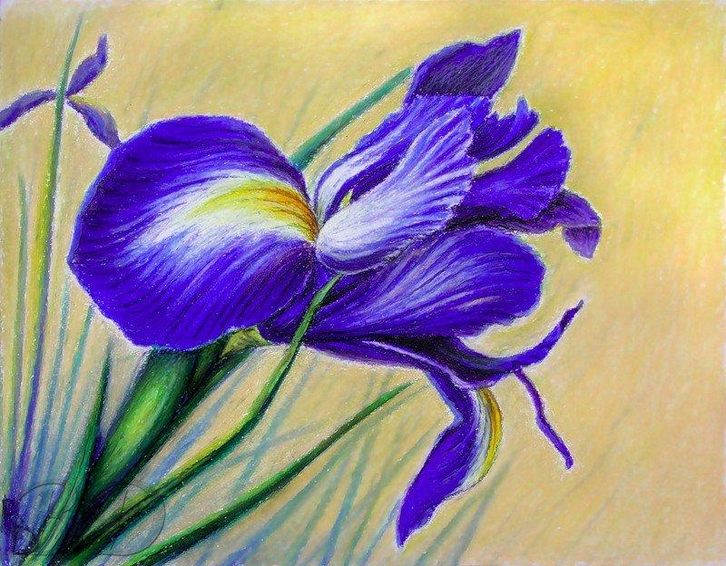 специальном уходе нарисовать цветок пастелью фото веки