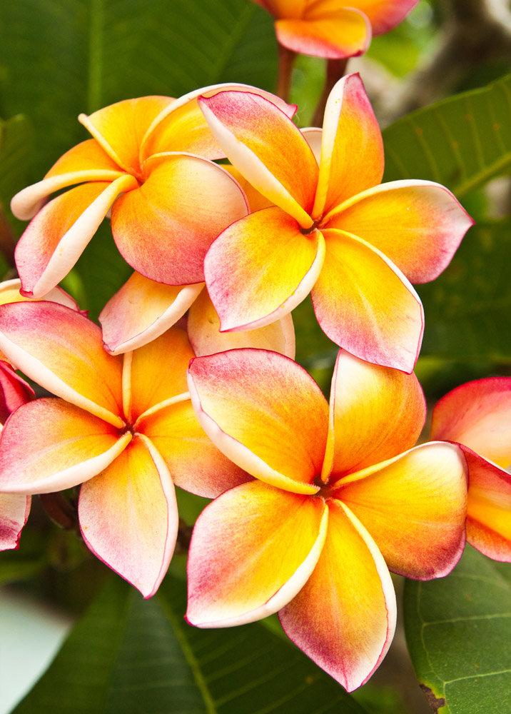 Растения цветы картинки