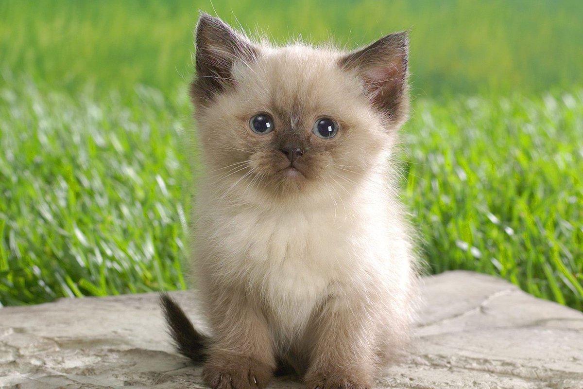 Надписями тебя, картинки животных котов