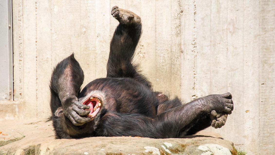Картинки про, смешные до слез картинки животных