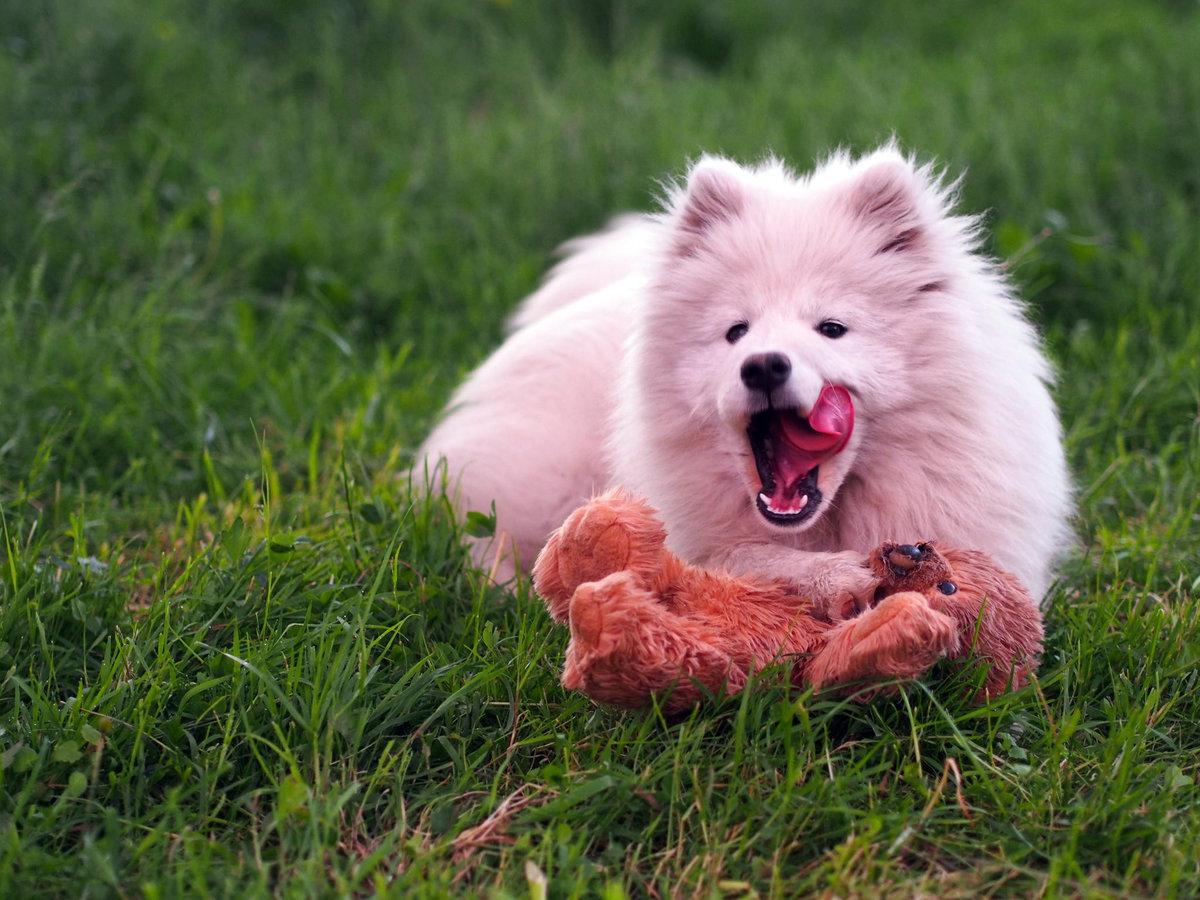 фото собак мясоедов вам это