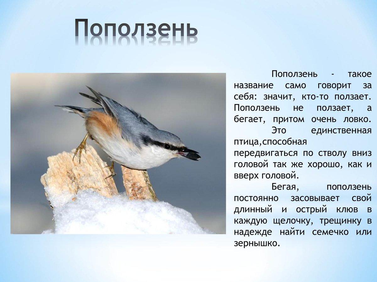 теме рассказ птичка с картинками этому