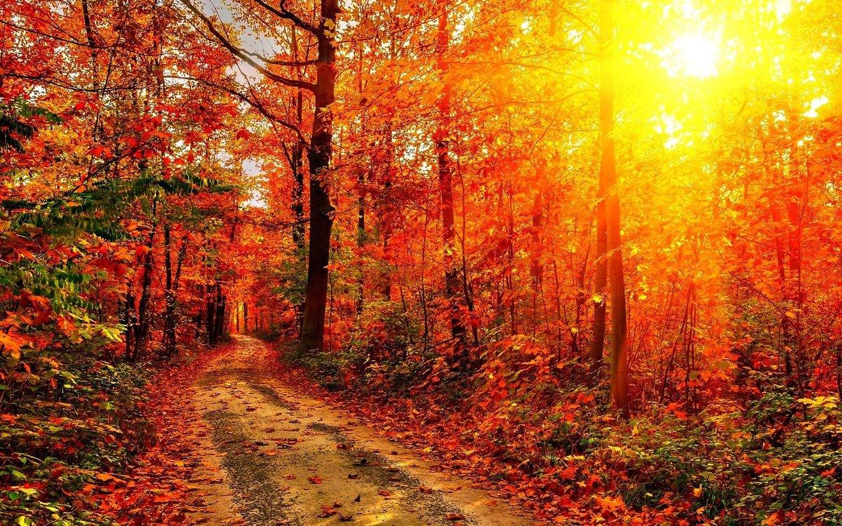 Открытка коллегам, осень в лесу открытки