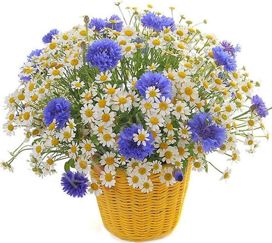 Картинки букеты полевых цветов на прозрачном фоне