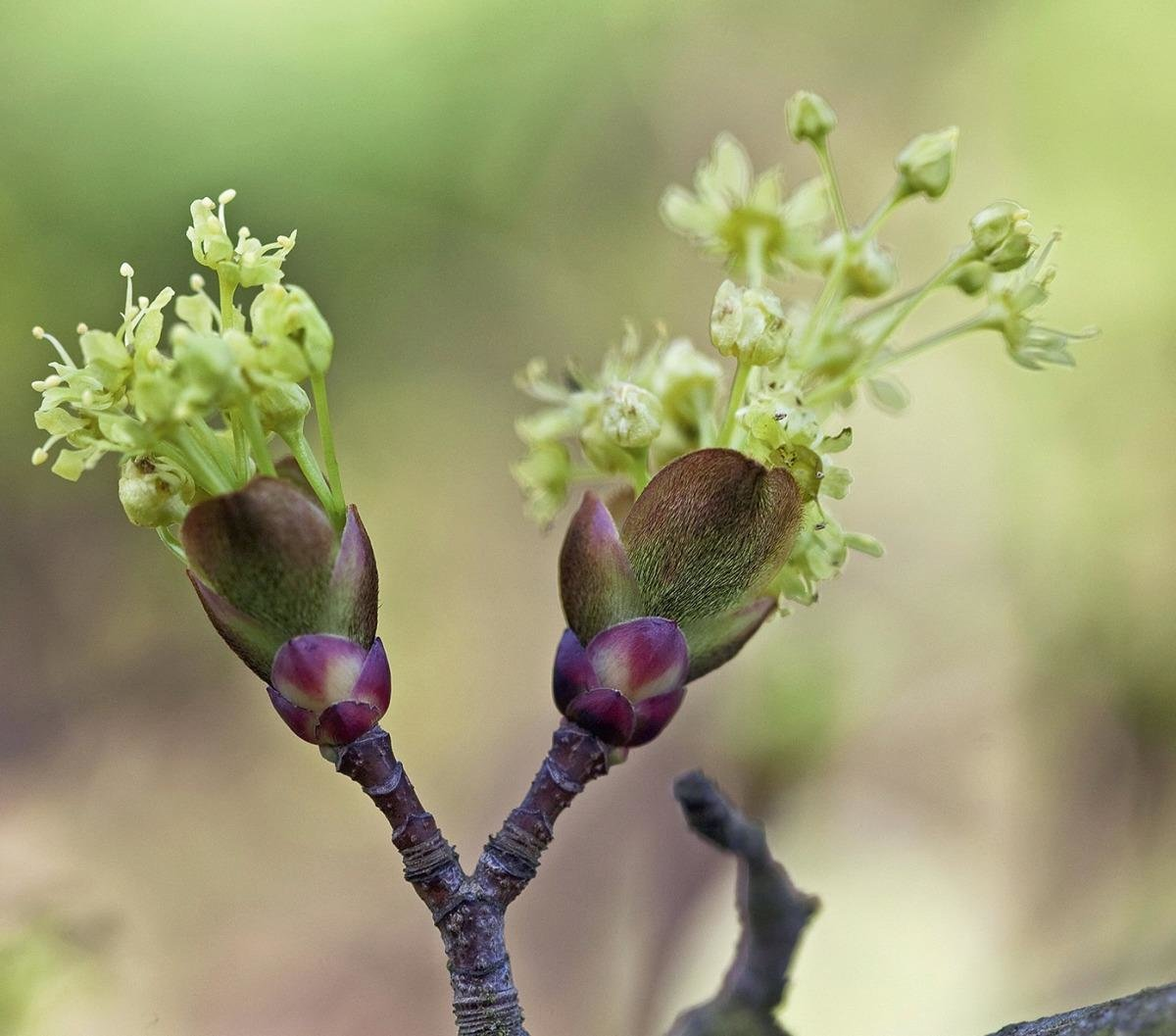 подход картинки весна почки на деревьях функция расшифровки нужна
