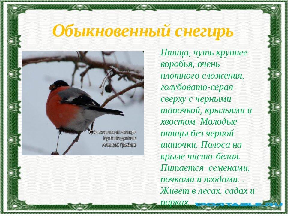 картинки и рассказы про птиц красотки показывают гладкие