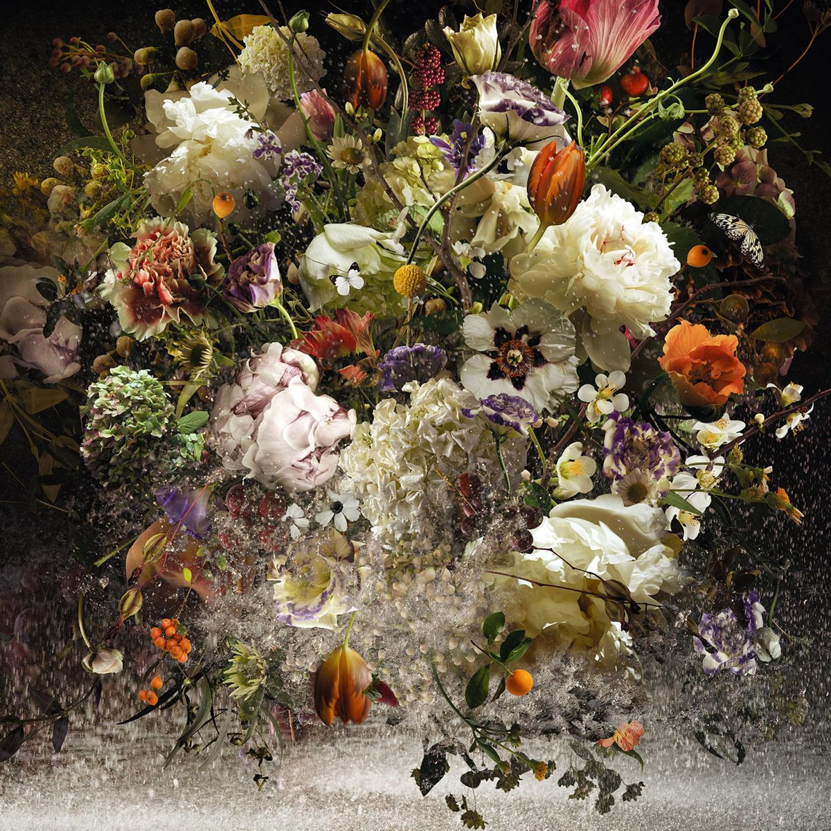 Фотографии цветка ириса разделена