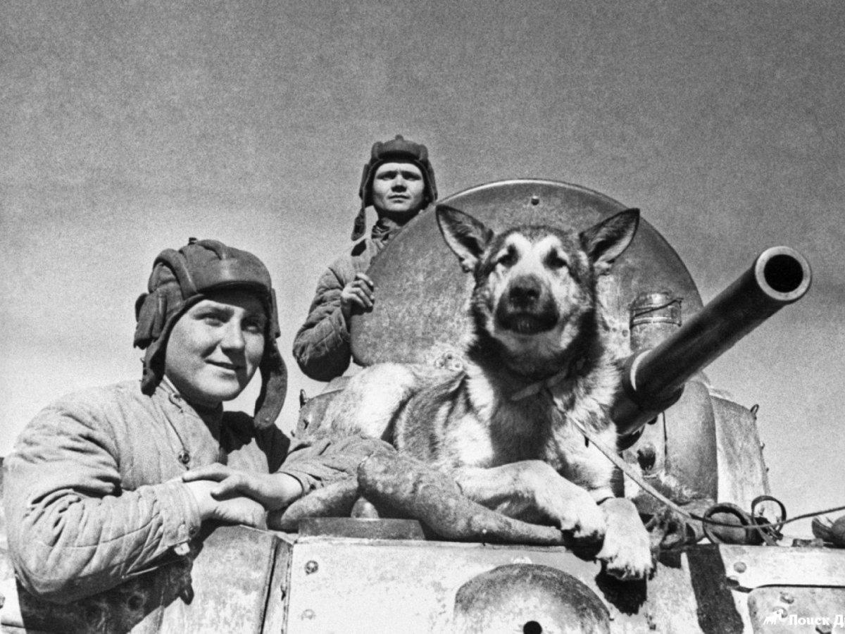Смешные картинки и фото военных лет, днем рождения раскраска