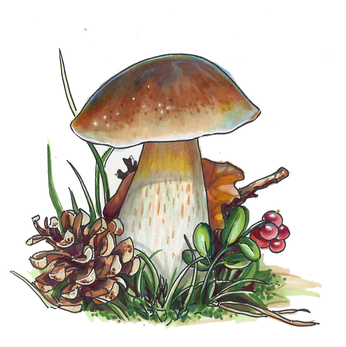 серединки белый гриб рисунок картинка большой