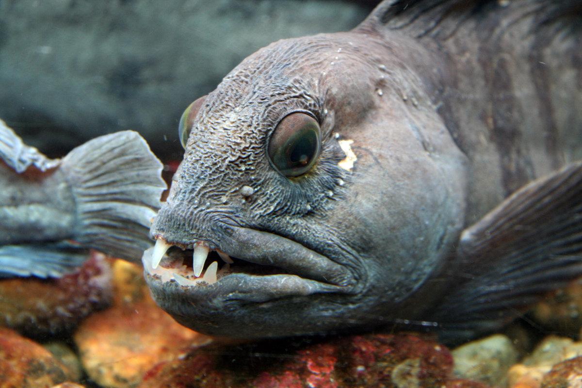 Ужасные рыбы картинки