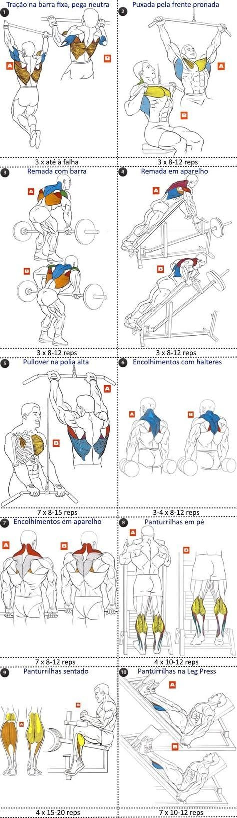 The Pullup Exercise Anatomy. Pullups are recognized as the king of ...
