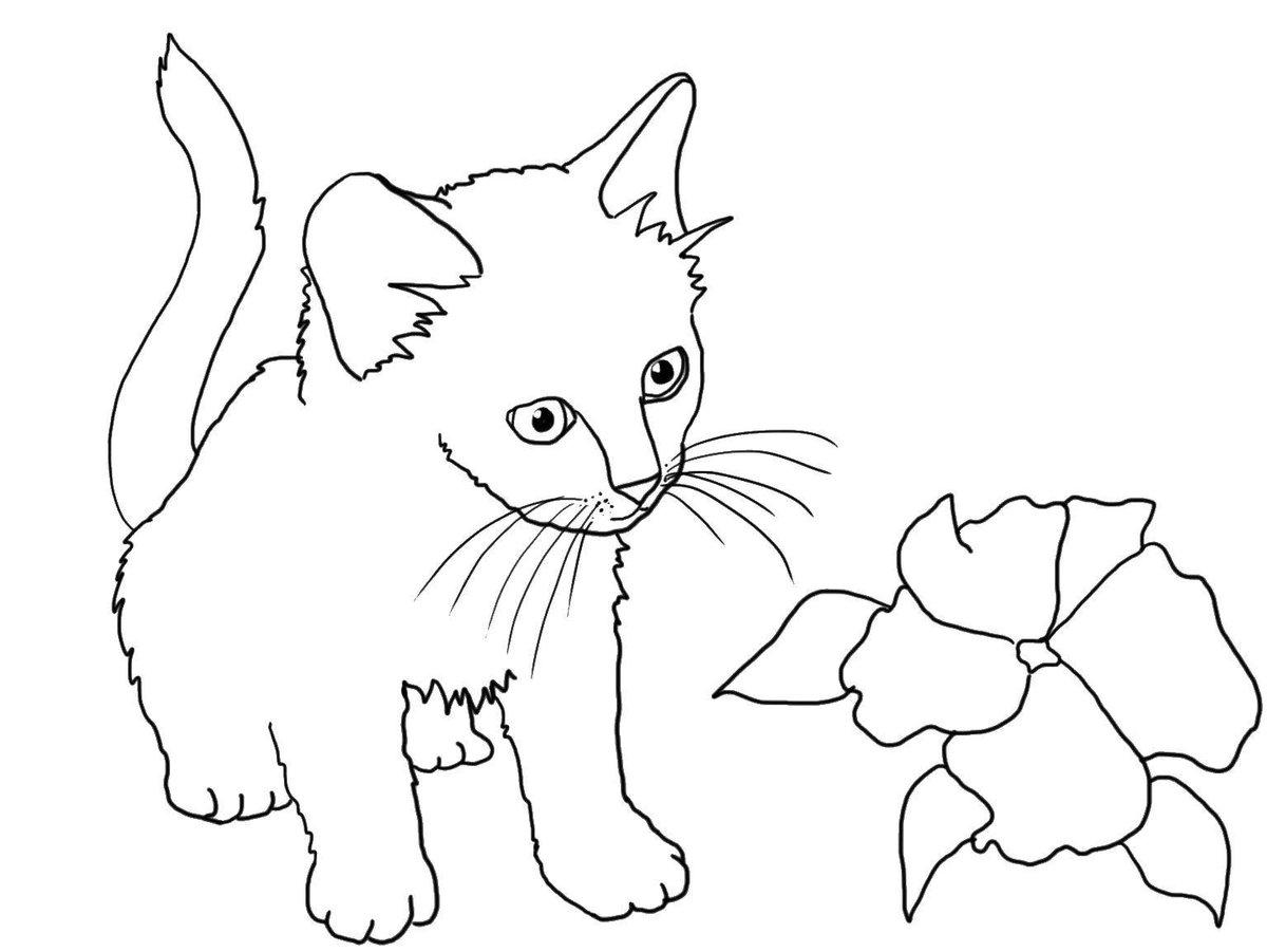 Картинка кошечка распечатать