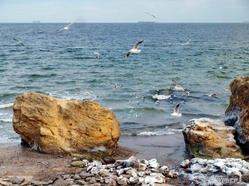 Море фото одесса