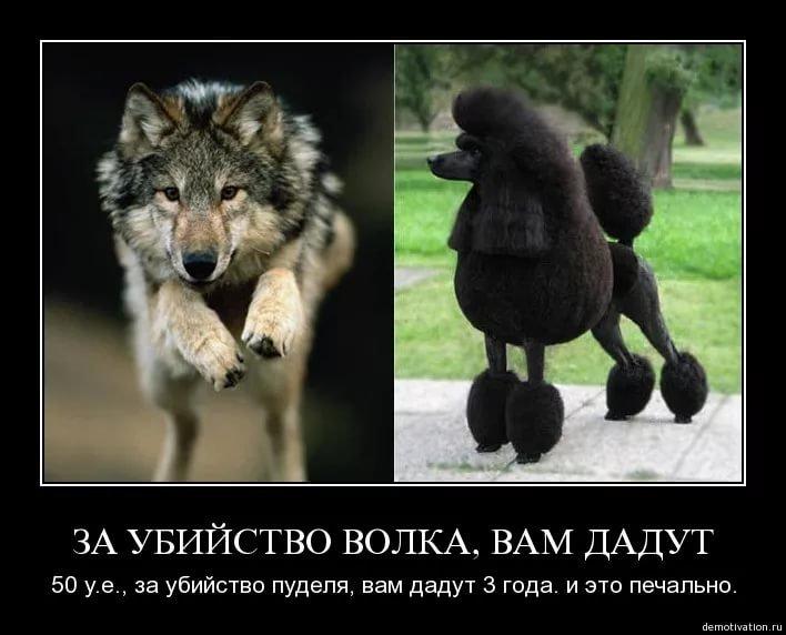 Смешные картинки про волка с надписями