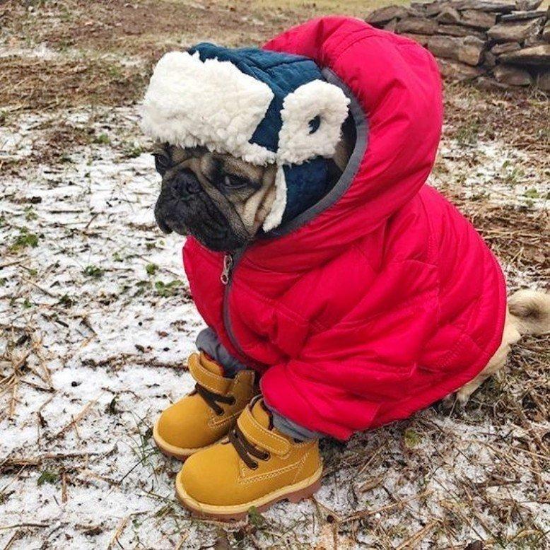 Девушке, картинки похолодало утепляйтесь
