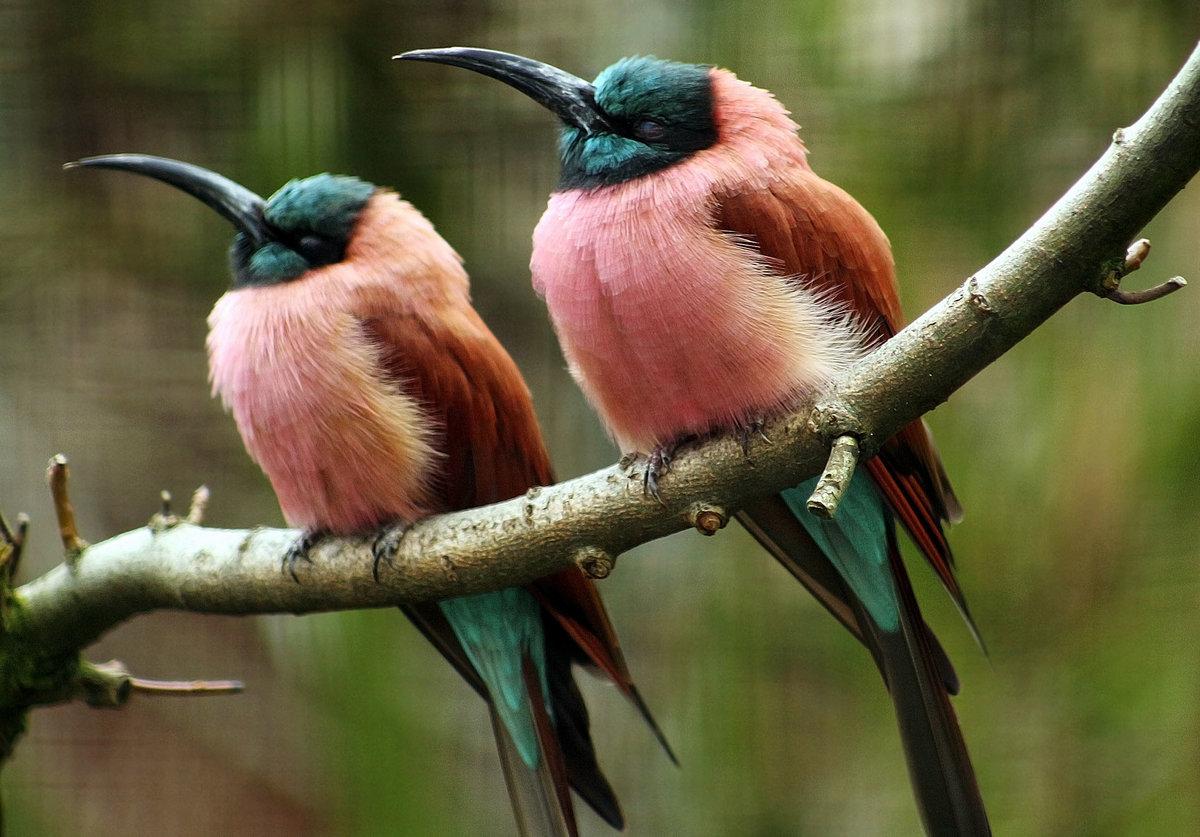 Все птицы мира фото