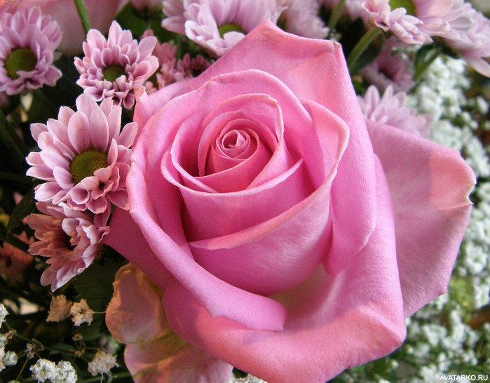 Гавайские, картинки открытки 8 марта розы красивые